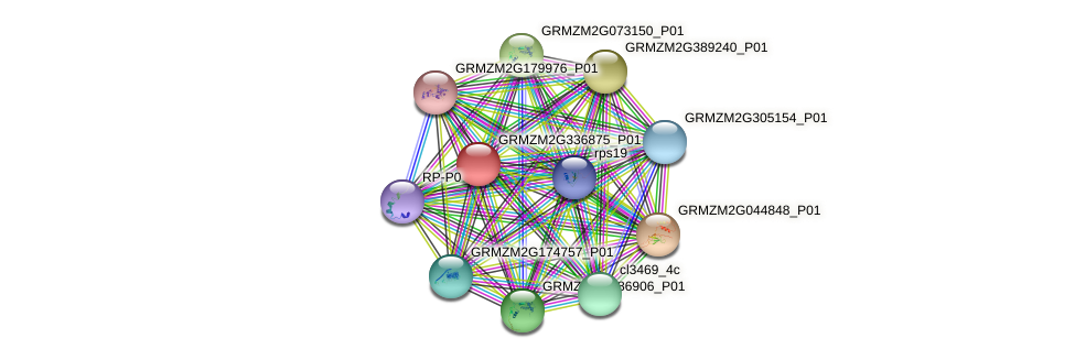 GRMZM2G336875_P01 protein (Zea mays) - STRING interaction network