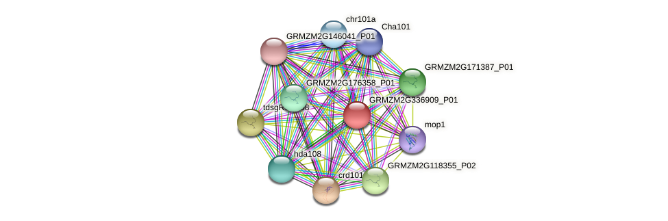 GRMZM2G336909_P01 protein (Zea mays) - STRING interaction network