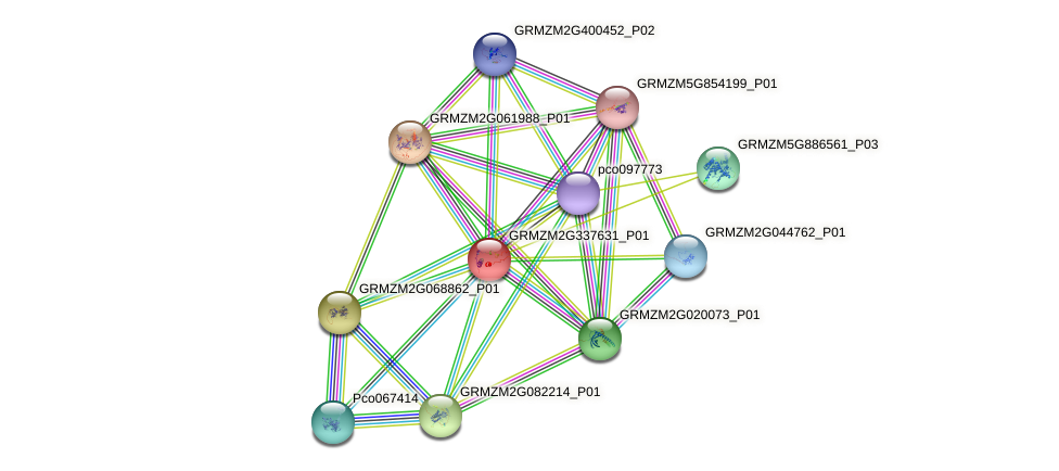 GRMZM2G337631_P01 protein (Zea mays) - STRING interaction network