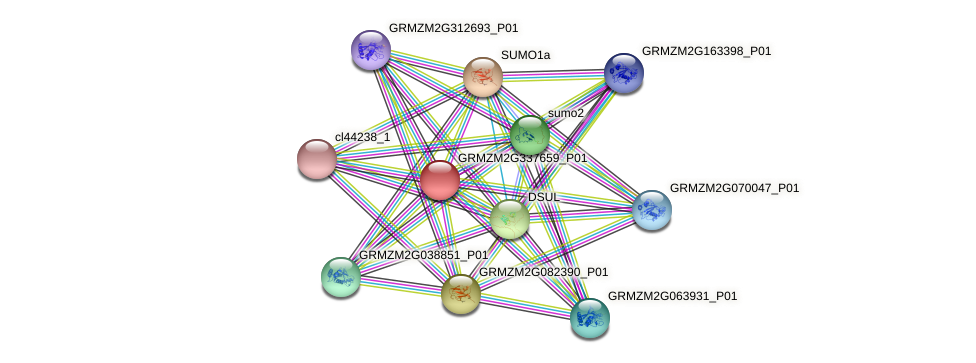 GRMZM2G337659_P01 protein (Zea mays) - STRING interaction network