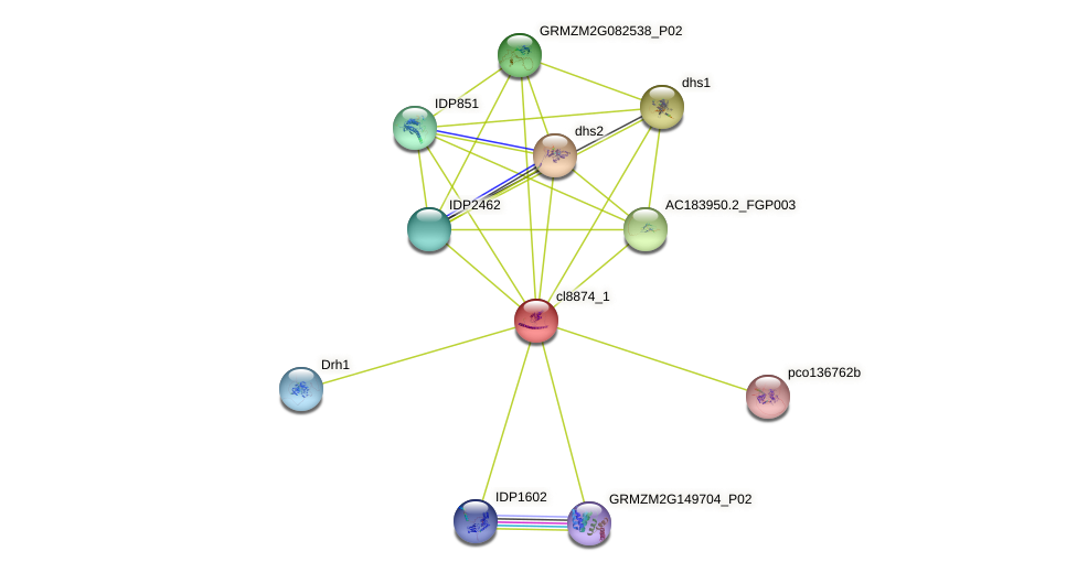 cl8874_1 protein (Zea mays) - STRING interaction network