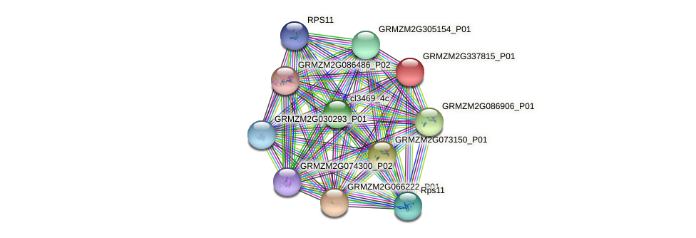 GRMZM2G337815_P01 protein (Zea mays) - STRING interaction network