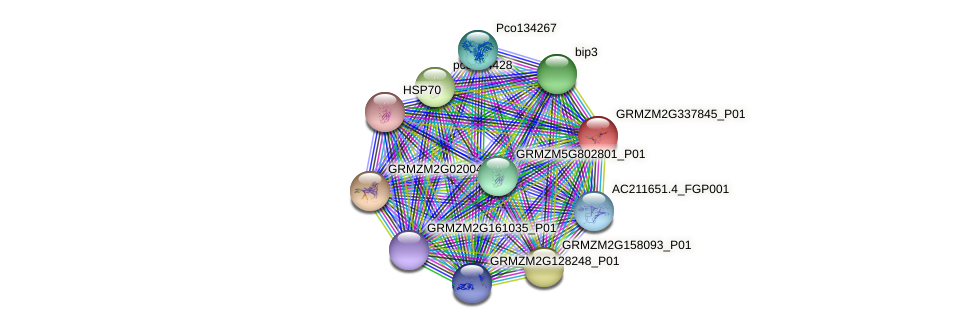 GRMZM2G337845_P01 protein (Zea mays) - STRING interaction network