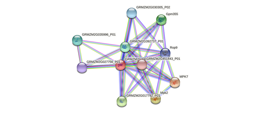 GRMZM2G338293_P01 protein (Zea mays) - STRING interaction network