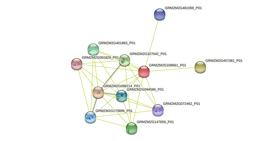 GRMZM2G338661_P01 protein (Zea mays) - STRING interaction network