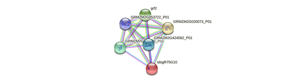 GRMZM2G338691_P01 protein (Zea mays) - STRING interaction network