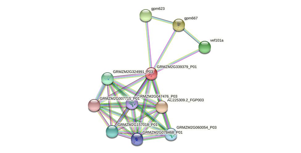 103636385 protein (Zea mays) - STRING interaction network