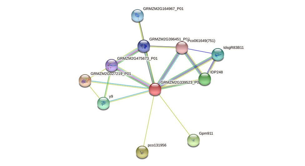 GRMZM2G339523_P01 protein (Zea mays) - STRING interaction network