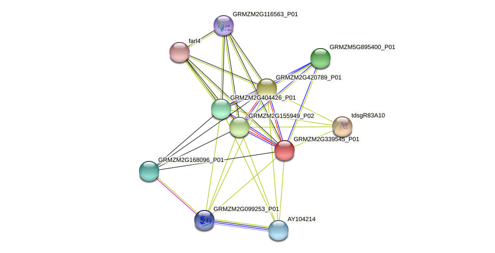 GRMZM2G339545_P01 protein (Zea mays) - STRING interaction network