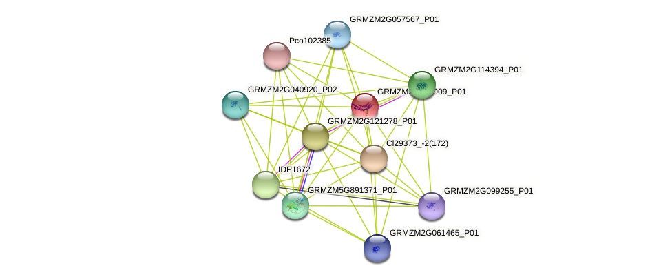GRMZM2G339909_P01 protein (Zea mays) - STRING interaction network