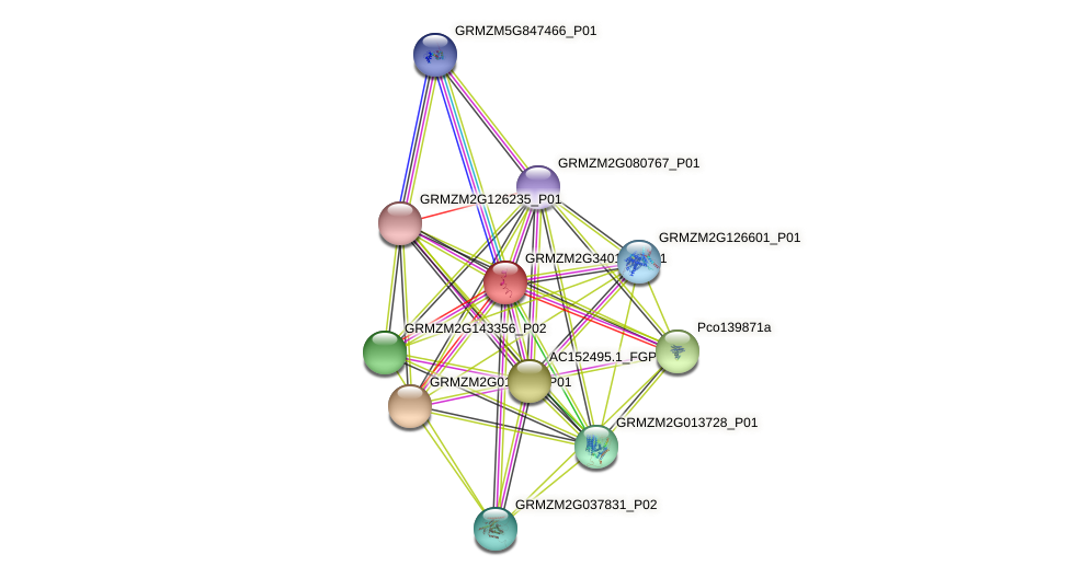 GRMZM2G340139_P01 protein (Zea mays) - STRING interaction network
