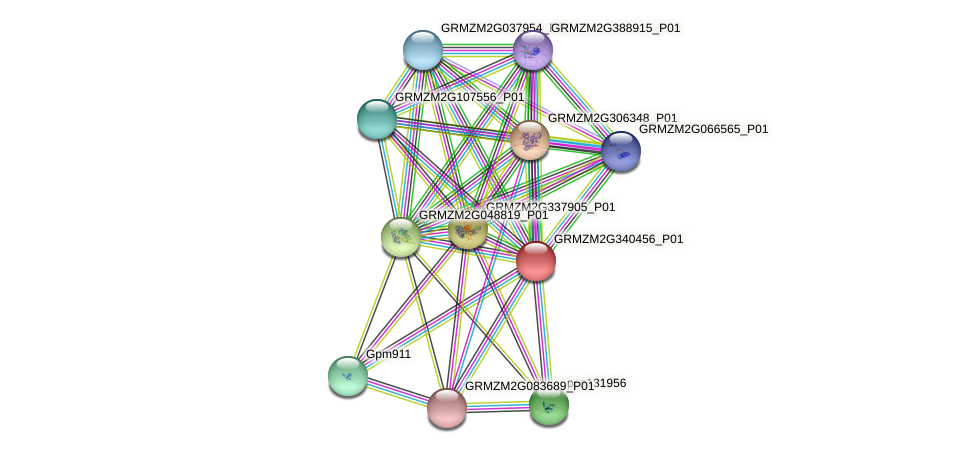 Zm.36050 protein (Zea mays) - STRING interaction network