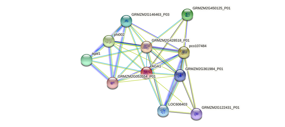 GRMZM2G340656_P01 protein (Zea mays) - STRING interaction network