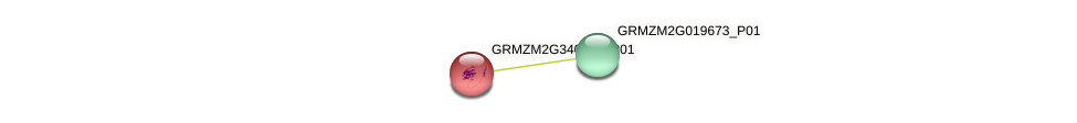 GRMZM2G340933_P01 protein (Zea mays) - STRING interaction network