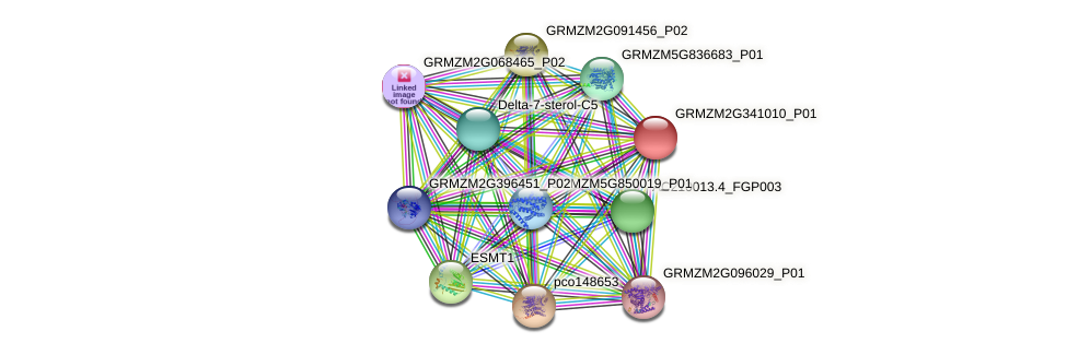 GRMZM2G341010_P01 protein (Zea mays) - STRING interaction network