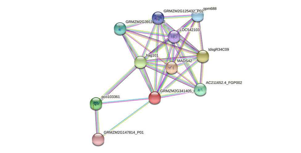 Zm.24245 protein (Zea mays) - STRING interaction network
