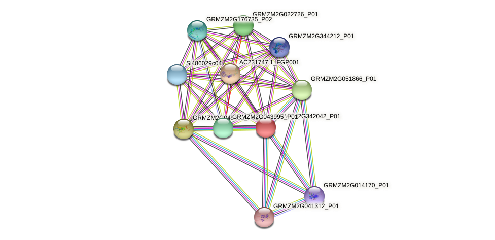 GRMZM2G342042_P01 protein (Zea mays) - STRING interaction network