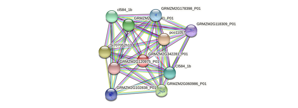 GRMZM2G342281_P01 protein (Zea mays) - STRING interaction network