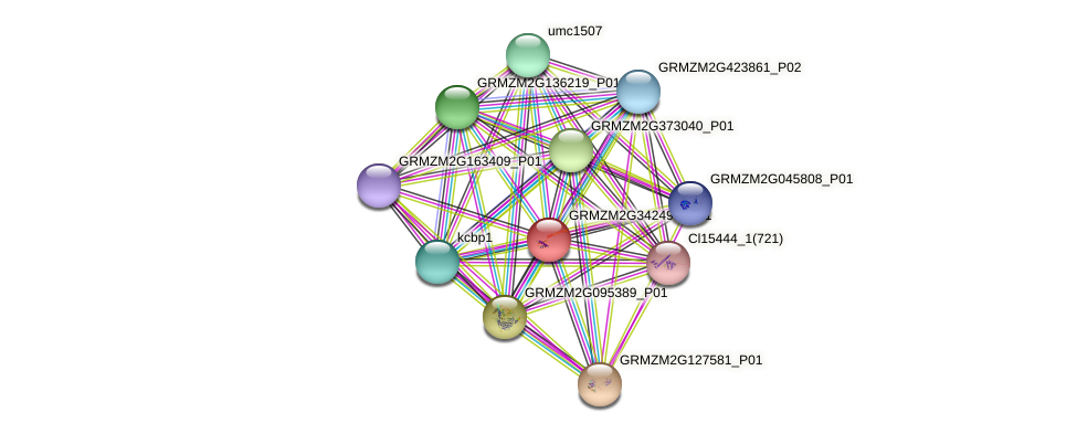 GRMZM2G342493_P01 protein (Zea mays) - STRING interaction network
