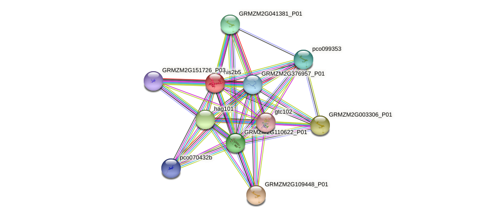 his2b5 protein (Zea mays) - STRING interaction network