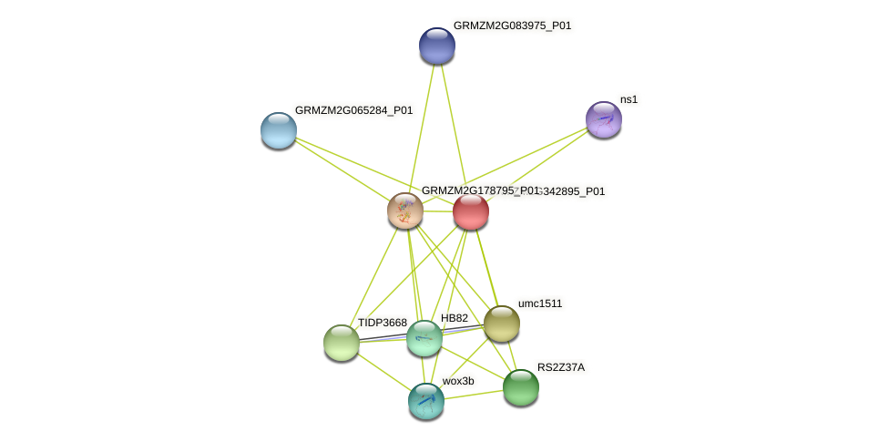 GRMZM2G342895_P01 protein (Zea mays) - STRING interaction network