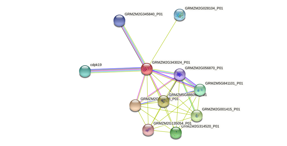 Zm.16839 protein (Zea mays) - STRING interaction network