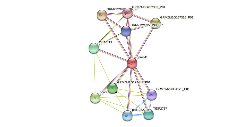 gpm341 protein (Zea mays) - STRING interaction network