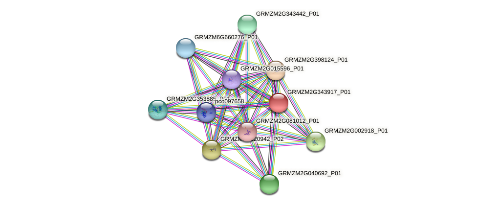 GRMZM2G343917_P01 protein (Zea mays) - STRING interaction network