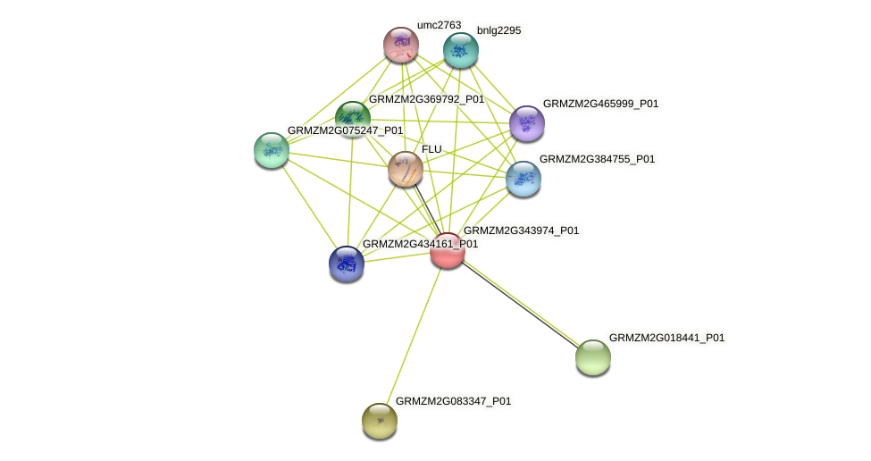 GRMZM2G343974_P01 protein (Zea mays) - STRING interaction network