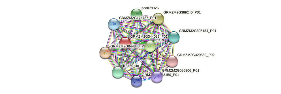 GRMZM2G344039_P01 protein (Zea mays) - STRING interaction network