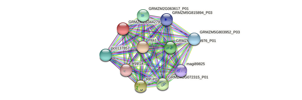GRMZM2G344279_P02 protein (Zea mays) - STRING interaction network