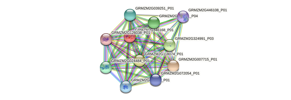 GRMZM2G346168_P01 protein (Zea mays) - STRING interaction network
