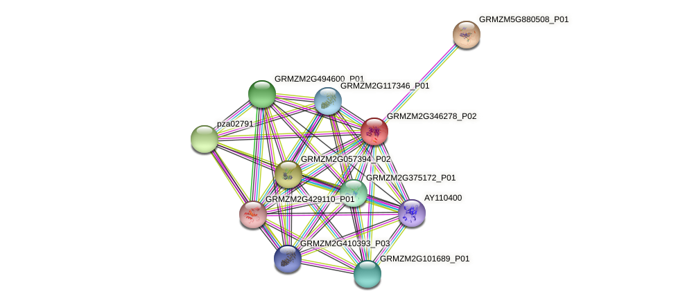 GRMZM2G346278_P02 protein (Zea mays) - STRING interaction network