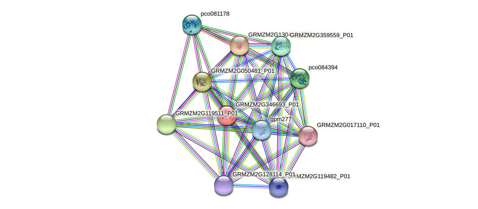 GRMZM2G346693_P01 protein (Zea mays) - STRING interaction network