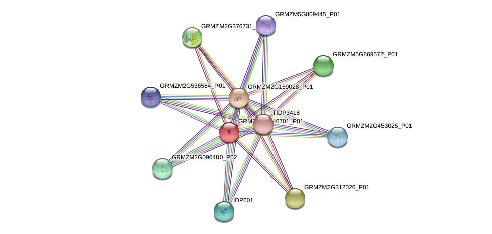 GRMZM2G346701_P01 protein (Zea mays) - STRING interaction network
