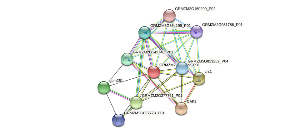 GRMZM2G347322_P01 protein (Zea mays) - STRING interaction network