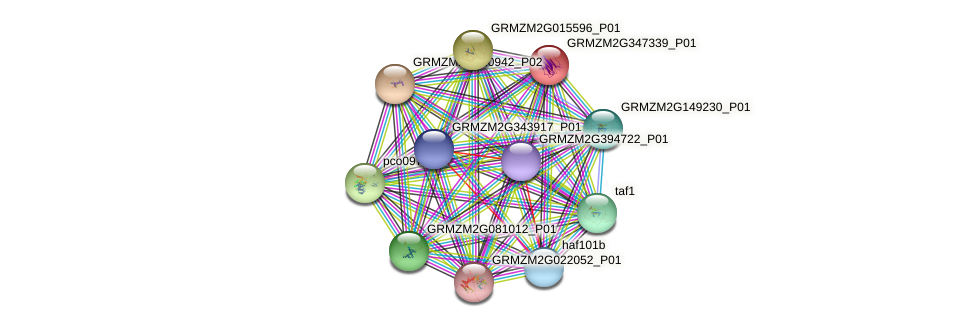 GRMZM2G347339_P01 protein (Zea mays) - STRING interaction network