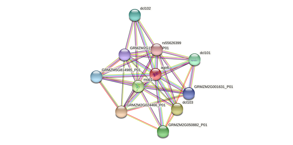 GRMZM2G347402_P01 protein (Zea mays) - STRING interaction network