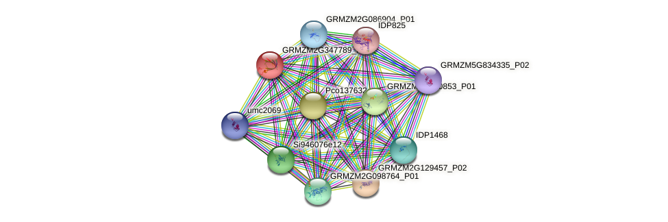 GRMZM2G347789_P01 protein (Zea mays) - STRING interaction network
