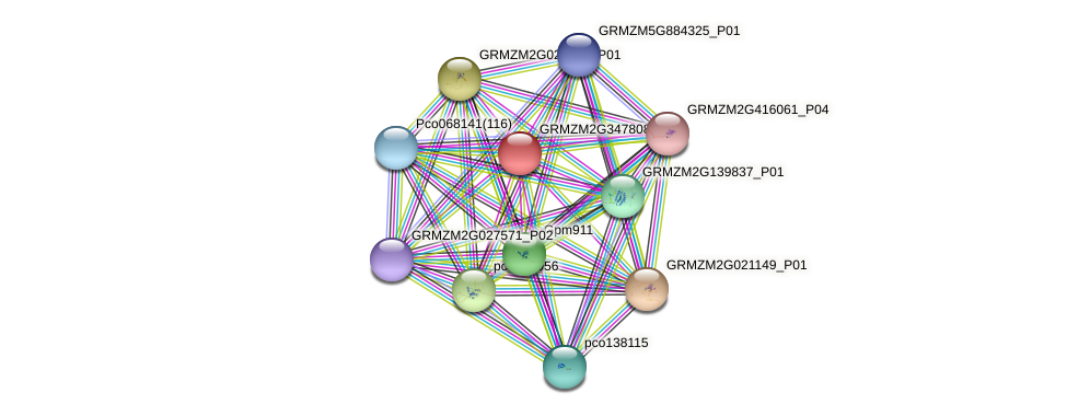 GRMZM2G347808_P01 protein (Zea mays) - STRING interaction network