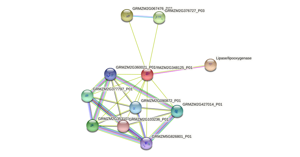 GRMZM2G348125_P01 protein (Zea mays) - STRING interaction network