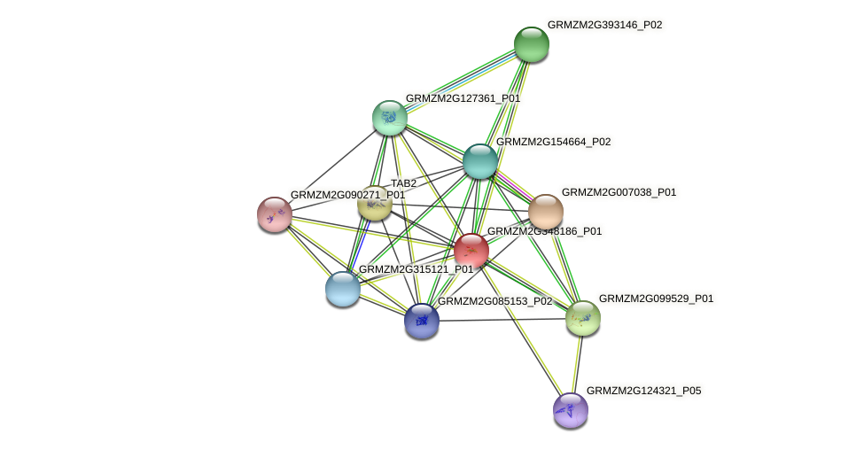 GRMZM2G348186_P01 protein (Zea mays) - STRING interaction network