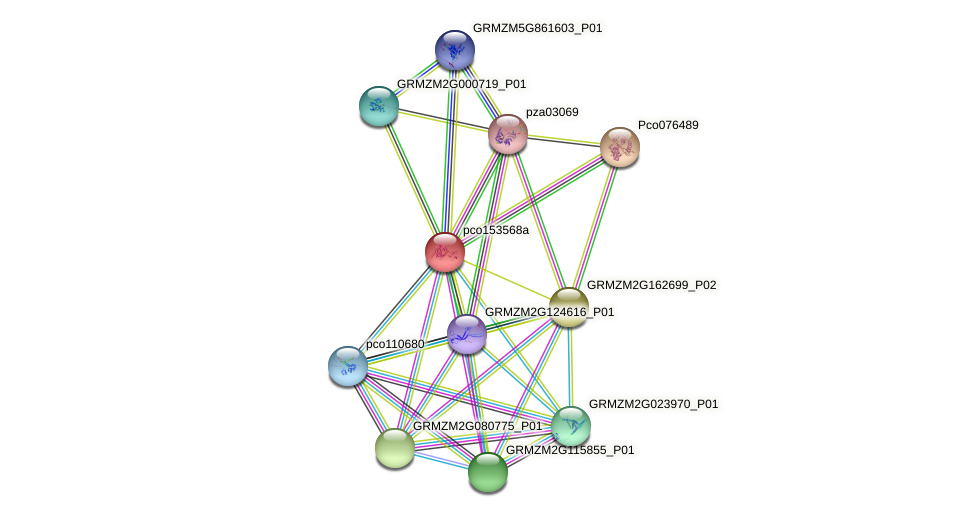 pco153568a protein (Zea mays) - STRING interaction network