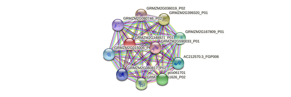 GRMZM2G348921_P01 protein (Zea mays) - STRING interaction network