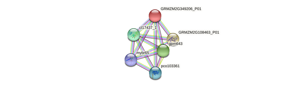 GRMZM2G349206_P01 protein (Zea mays) - STRING interaction network