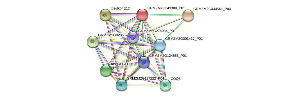 GRMZM2G349380_P01 protein (Zea mays) - STRING interaction network