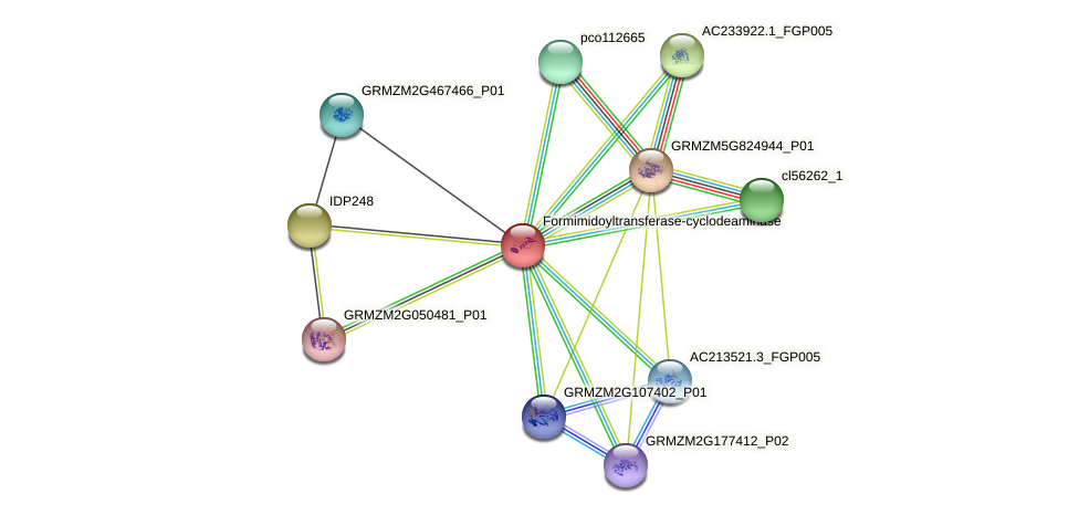 GRMZM2G349536_P01 protein (Zea mays) - STRING interaction network