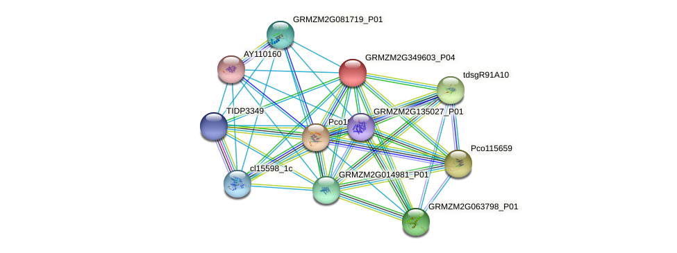 GRMZM2G349603_P04 protein (Zea mays) - STRING interaction network