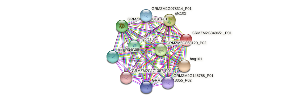 GRMZM2G349651_P01 protein (Zea mays) - STRING interaction network