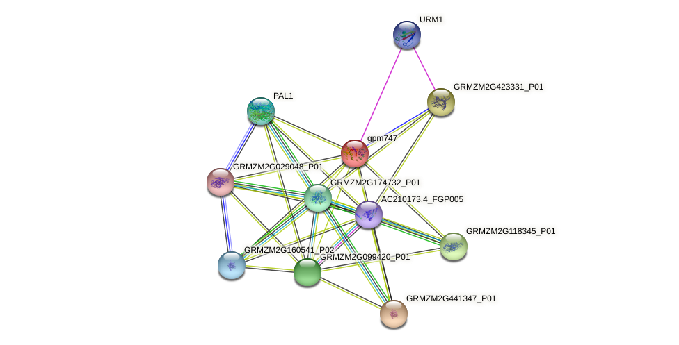 gpm747 protein (Zea mays) - STRING interaction network
